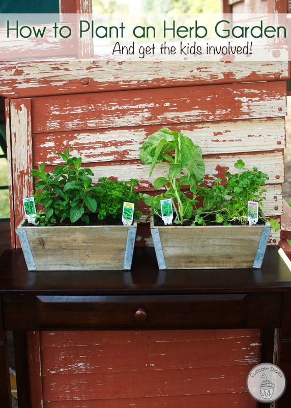 How to Plant an Herb Garden (And Get the Kids Involved!)