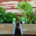 How to Plant an Herb Garden {And Get the Kids Involved!} + GIVEAWAY